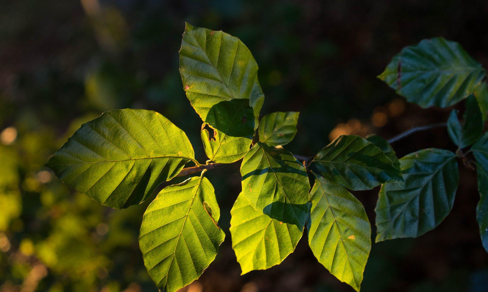 Baumschutz-Nord